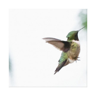 Animal Bird Ruby-throated Hummingbird Stretched Canvas Print
