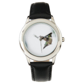 Animal Bird Ruby-throated Hummingbird Watch