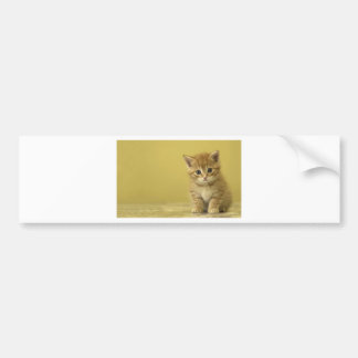 Animal - Curious Baby Kitten Bumper Stickers