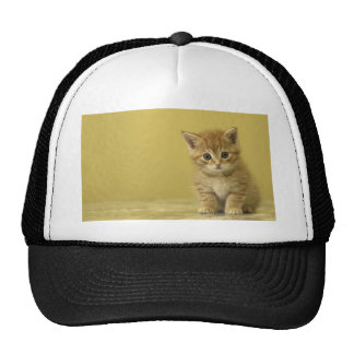 Animal - Curious Baby Kitten Cap