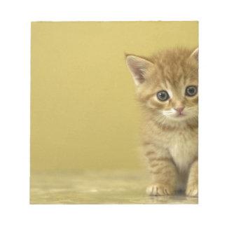 Animal - Curious Baby Kitten Notepad