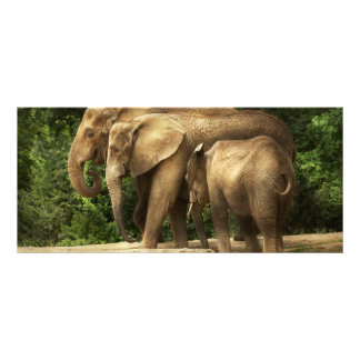 Animal - Elephant - Tight knit family Rack Card
