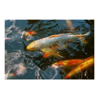 Animal - Fish - Bestow good fortune