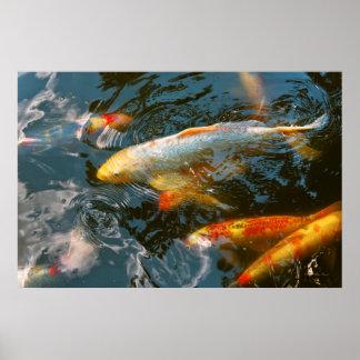 Animal - Fish - Bestow good fortune Poster