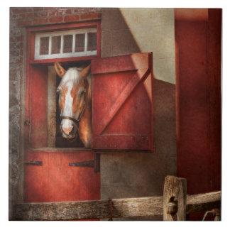 Animal - Horse - Calvins house Tile