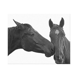 Animal horse equestrian photo black and white canvas print
