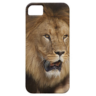 Animal iPhone 5 case-mate case with Lion Barely There iPhone 5 Case