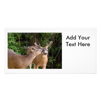 Animal Love Deer Bucks Photo Card