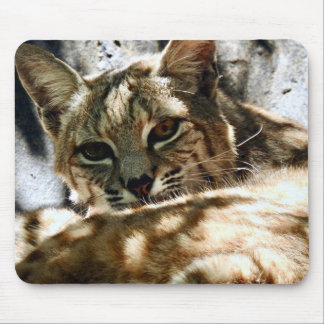 Animal Mousepad Series - Bobcat