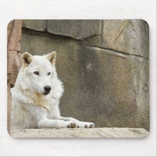 Animal Mousepad Series - White Wolf