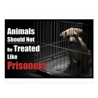 Animal Not Prisoners Postcard