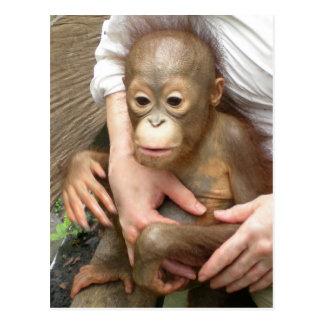 Animal Orphans Postcard