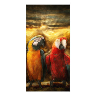 Animal - Parrot - Parrot-dise Customized Photo Card