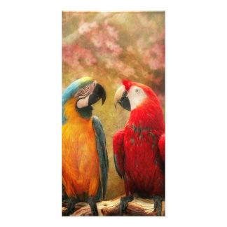 Animal - Parrot - We'll always have parrots Photo Card Template