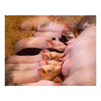 Animal - Pig - Comfort food Flyer