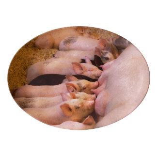 Animal - Pig - Comfort food Porcelain Serving Platter