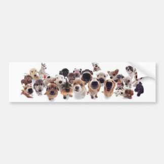 Animal Print Bumper Sticker