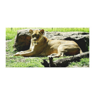 Animal Print - Lion