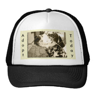 Animal Shelter Gifts and Stationery Mesh Hat
