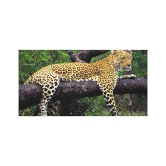 Animal Tiger Canvas Print