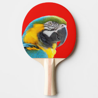 Animal tropical parrot macaw bird photo ping pong paddle