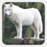 Animal Wolf Nature Peace Love Destiny Square Sticker