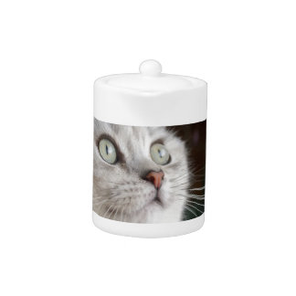 Animals Cat Feline