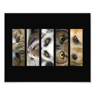 Animals Eyes Landscape Photograph
