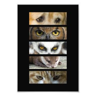 Animals Eyes Photo Art