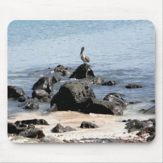 animals of the Galapagos Mouse Pad