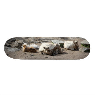 Animals Skate Board Decks