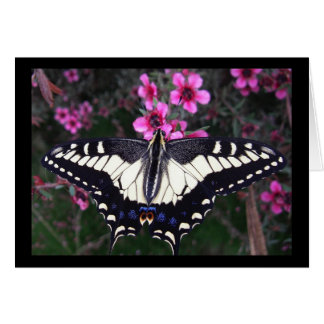 Anise Swallowtail Butterfly Blank Card