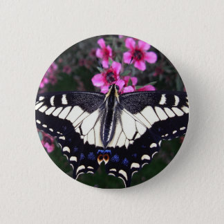 Anise Swallowtail Butterfly Button