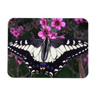 Anise Swallowtail Butterfly Flexible Photo Magnet