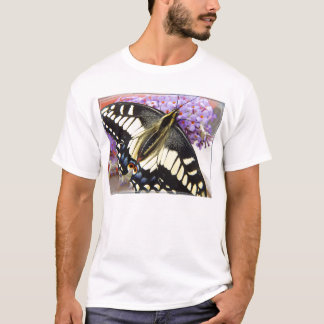 Anise swallowtail butterfly - Men's t-shirt