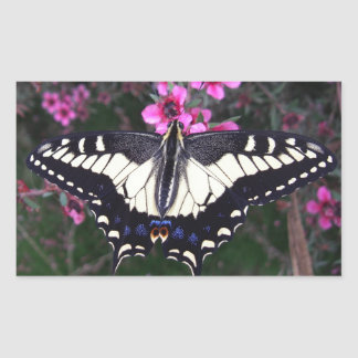 Anise Swallowtail Butterfly Rectangle Stickers