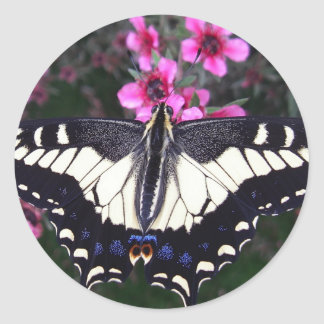 Anise Swallowtail Butterfly Stickers