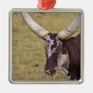 Ankole-Watusi breed of cattle Metal Ornament