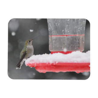 Anna's Hummingbird in the Snow Magnet