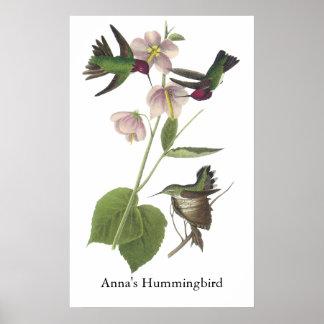 Anna's Hummingbird, James Audubon Poster