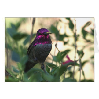 Anna's Hummingbird - Joe Sweeney - card
