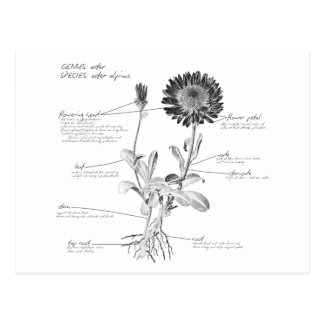 Annotated Botanical Diagram Postcard