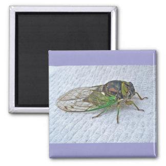 Annual Cicada Coordinating Items Square Magnet