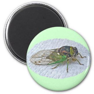Annual Cicada Coordinating Items 6 Cm Round Magnet