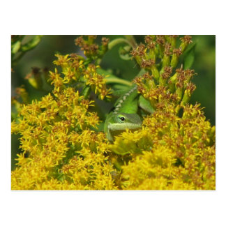 Anole in Goldenrod Postcard