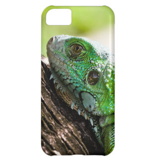 another green day case for iPhone 5C