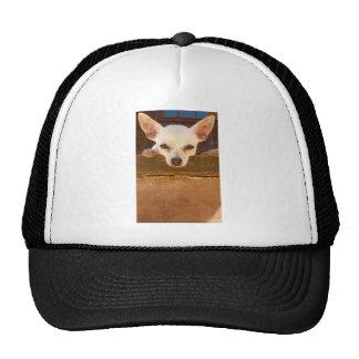 another horney italian cap