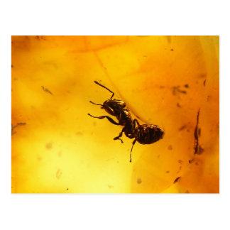 Ant inside amber postcard
