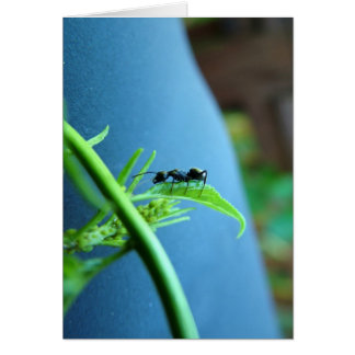 Ant on a Leaf Greeting Cards