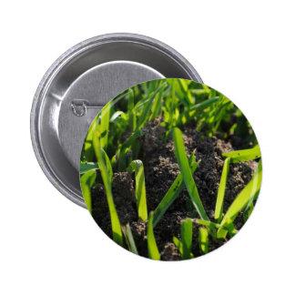 Ant Pile 6 Cm Round Badge